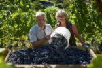 Weingut Goldwand Ennetbaden Michael & Barbara Wetzel